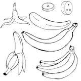 Et van hand-drawn eenvoudige niet gekleurde bananen royalty-vrije illustratie
