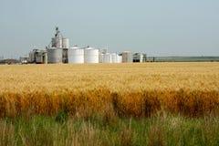 etanol roślina Zdjęcia Stock