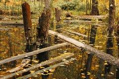 Etap życia w lasowym ekosystemu Zaniechany, zalewający las, Obrazy Royalty Free
