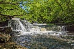 A etapa cai no parque estadual de pedra velho em Tennessee fotografia de stock royalty free