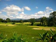 Etapa da exploração agrícola do arroz em Pua, Nan, Tailândia Imagens de Stock