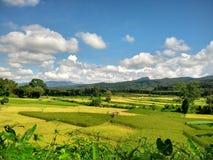 Etapa da exploração agrícola do arroz em Pua, Nan, Tailândia Fotografia de Stock