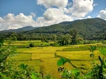 Etapa da exploração agrícola do arroz em Pua, Nan, Tailândia Fotos de Stock Royalty Free