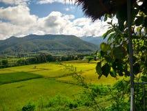 Etapa da exploração agrícola do arroz em Pua, Nan, Tailândia Foto de Stock Royalty Free