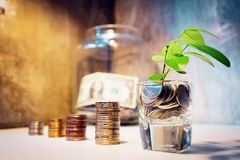 Etapa de pilhas das moedas com a árvore que cresce na casa superior e de madeira m foto de stock