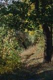 Etapa na luz: uma caminhada lindo da manhã através de uma floresta pequena, removendo minha respiração naughty imagens de stock