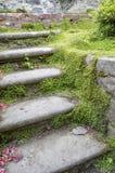 Etapas cobertos de vegetação do jardim Imagem de Stock Royalty Free