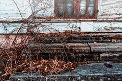 Etapas cobertos de vegetação na frente de uma casa abandonada Fotografia de Stock