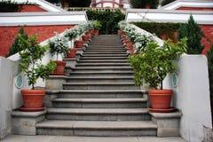 Etapas com plantas potted Fotos de Stock Royalty Free