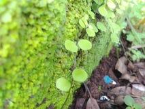 Etapas da parede na natureza verde Fotografia de Stock Royalty Free