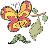Etapas de la mariposa Foto de archivo libre de regalías