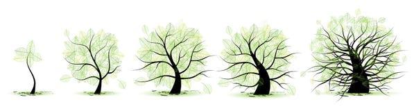 Etapas de la vida del árbol stock de ilustración