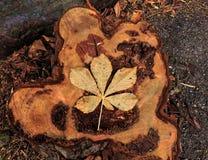 Etapas de la vida del árbol Fotografía de archivo