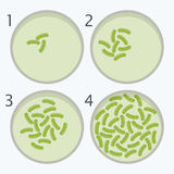 Etapas del crecimiento de las bacterias bacteria en placas de Petri stock de ilustración