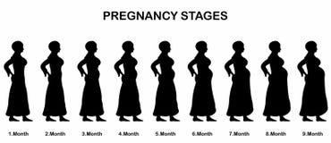 Etapas del embarazo de las siluetas de una mujer de los musulmanes Imagen de archivo libre de regalías