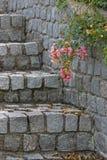Etapas e rosas Foto de Stock Royalty Free