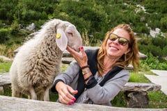 Etapas peludos com fome mas amigáveis dos carneiros em um banco e em um turista da moça das aproximações, na busca para o aliment imagens de stock