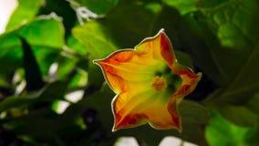 Etapper av tillväxt och att blomma Blommande begrepp arkivfoton