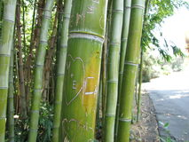Etched Bamboo. Initials carved into Bamboo stalks royalty free stock images