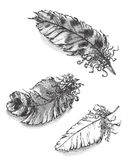 Etched feathers. Three different hand drawn feathers in etching style Royalty Free Stock Images