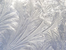 Etched in ice Stock Photography