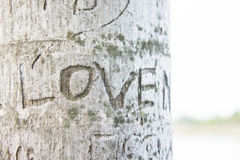 Etched love on tree , the word. The Etched love on tree , the word `Love` on tree , abstract love on wood background Stock Image