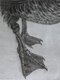 Etching of a goose's legs Royalty Free Stock Photos