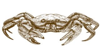 Etching illustration of crab. Vector engraving illustration of crab isolated on white background Stock Image