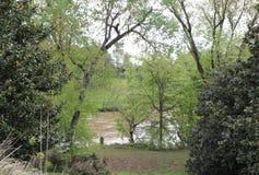 Eterisk skönhet av träd och floden royaltyfri foto