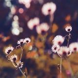 Eteriskt kronbladglöd fotografering för bildbyråer