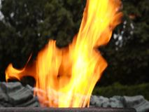 Eternal flame open flame. Open flame, flame of fire, beautiful and bewitching appearance, tongues of flame stock video