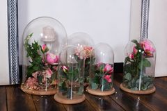 The eternal roses in the flask, Several roses. Long-lasting rose in a flask, in a glass dome, stabilized.  The perfect gift for mo. Ther`s day, valentine`s day royalty free stock photo