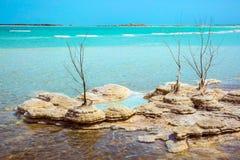 Eternally live Dead Sea Stock Photography
