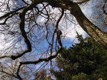 Eternidad en árboles Nube blanca Cielo azul Ramas todavía desnudas Él primavera del ` s La belleza del cielo El azul del cielo El foto de archivo