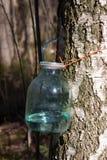 подрыв березы Стоковая Фотография RF