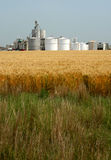 Ethanol Plant. Vertical view of silos and bins of ethanol plant with ripening golden wheat field in foreground Stock Images