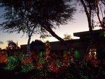 Ethelm Chocolate Factory Cactus Tuin voor Kerstmis wordt verfraaid die Royalty-vrije Stock Foto
