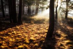Ethereal δέντρα Στοκ Εικόνα
