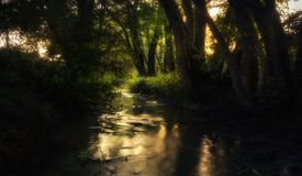 Ethereal creek during summer. Ethereal creek outside the city during summer sunny day Royalty Free Stock Photos