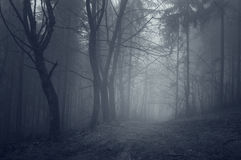 Ethereal dark forest with fog Stock Image