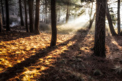 Ethereal Trees Royalty Free Stock Photo