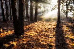 Ethereal Trees Royalty Free Stock Images