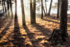 Ethereal Trees Royalty Free Stock Photos