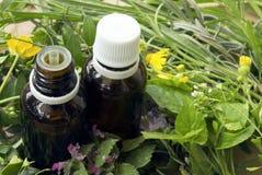 Etherische oliën en medische kruiden Royalty-vrije Stock Afbeeldingen