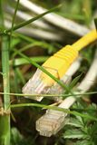 Ethernet cable on grass Stock Photos