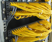 Ethernet RJ45 cables are connected to internet switch. On business server network Royalty Free Stock Image