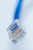 Ethernetkabel Royaltyfria Bilder