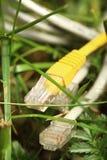 Ethernetkabel på gräs Arkivfoton