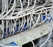 Ethernetkabels met de server die van computerinternet worden verbonden Stock Afbeeldingen