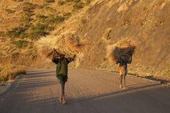 Ethiopiërs met hooibundels Royalty-vrije Stock Fotografie
